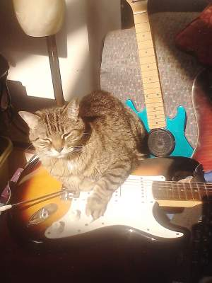 Cats That Rock
