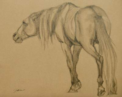 Horse Paintings And Drawings - Facing Left
