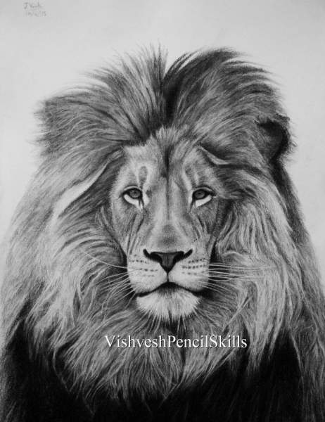 Lion drawing pencil and color pencil