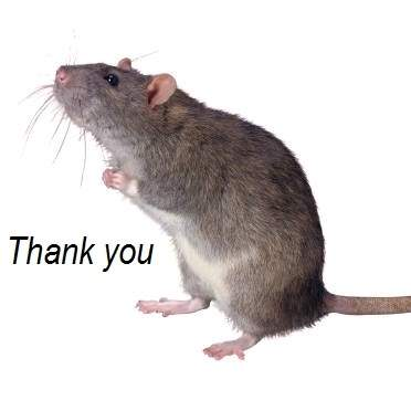 Thank You - Contest - MOUSE