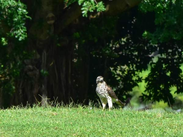 Wild Birds On The Ground - Nature Photography Only