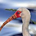 Water Bird Photography