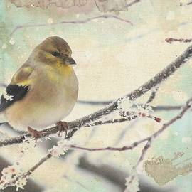 Diane Alexander - American Goldfinch in Winter