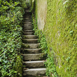 Deborah Smolinske - Stairs Through The Ivy