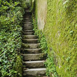 Deborah Smolinske - Stairs Through The Ivy