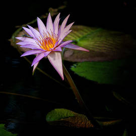 Greg Kluempers - Water Lilly Square IMG 2468