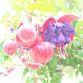 Mother Nature - Extreme Fuchsia