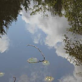 Denise Lowery - Reflection