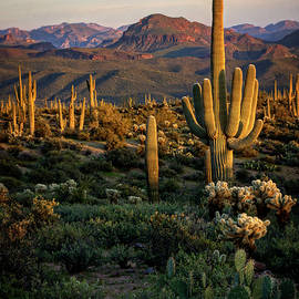 Saija Lehtonen - A Golden Sonoran Evening