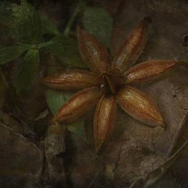 Nina Stavlund - Art of Nature..