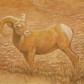 Sharon Karlson - Big Horn Ram