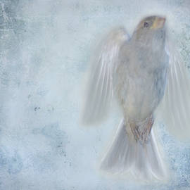 Jim Wright - Birdness