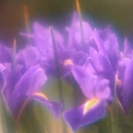 Umar Sharif Rep for Karl Stone Art - Bright Iris KS2-20