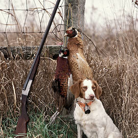 Daniel Dempster - Brittany and Pheasants - FS000757b