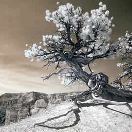 Bryce Canyon Tree Sculpture by Mike Irwin