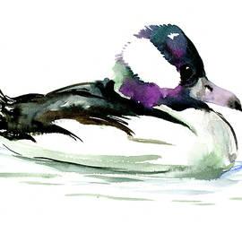 Suren Nersisyan - Bufflehead duck illustration