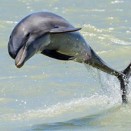 Wade Aiken - Dolphin
