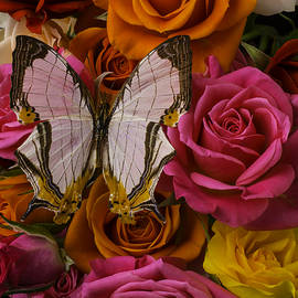 Exotic Butterfly On Roses - Garry Gay