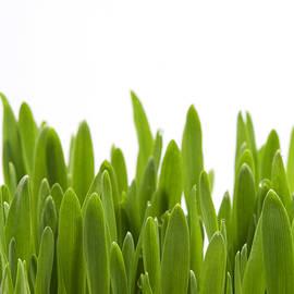 Fabrizio Troiani - Green Grass
