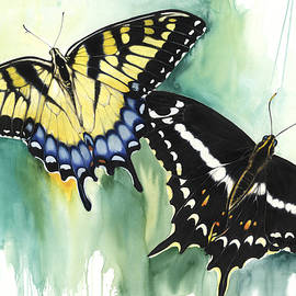 Anthony Burks Sr - Schaus Swallowtail Butterfly