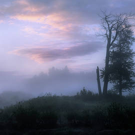 Sentinels in the Valley - Dan Jurak
