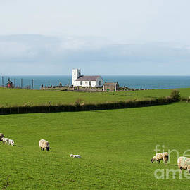 Juli Scalzi - Sheep Grazing on Irish Coastline
