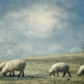 Kathy Jennings - Sheep On The Hill