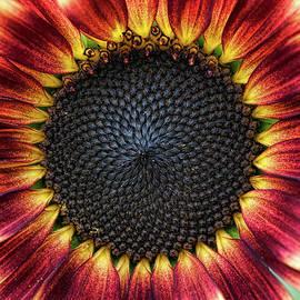 Sunflower Pastiche - Tim Gainey