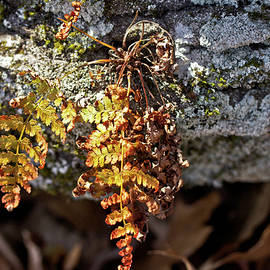 Mother Nature - The Golden Fern