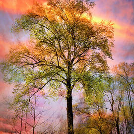 Trees in the Brilliance of Evening