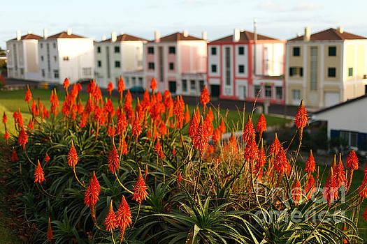 Gaspar Avila - Aloe flowers