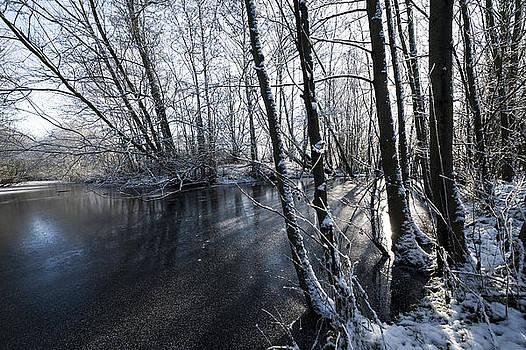 Svetlana Sewell - Through the Trees