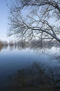 Svetlana Sewell - Winter Tree
