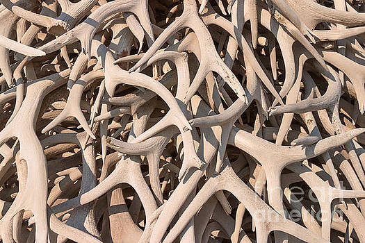Charles Kozierok - Antler Collage