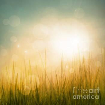 Mythja  Photography - Autumn or summer abstract season nature background