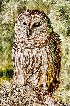 Deborah Benoit - Barred Owl on Moss