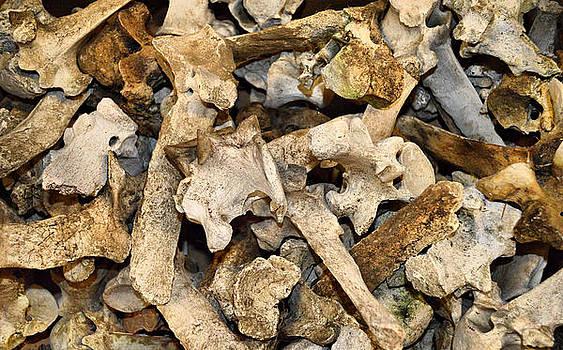 Cindy Nunn - Bone Collector