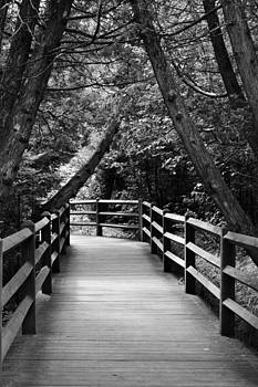 Michelle Calkins - Cedar Pathway