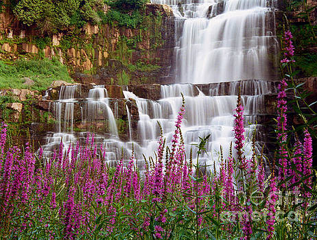 Oscar Gutierrez - Chittenango Falls and Purple Strife