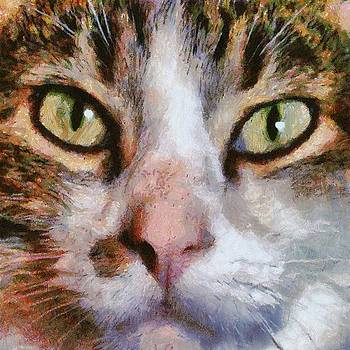 Tracey Harrington-Simpson - Cool for Cats