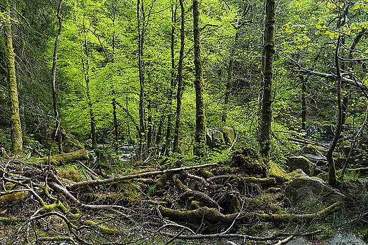 Svetlana Sewell - Deep Forest