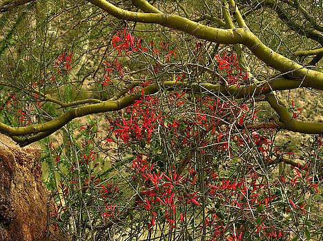 Robert Lozen - DESERT FLOWERS