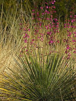 Robert Lozen - DESERT GRASS FLOWERS