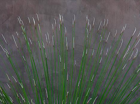 Robert Lozen - DESERT PLANT