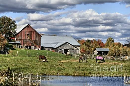 Deborah Benoit - Fall At The Horse Farm