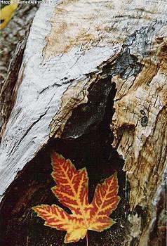 Karin Thue - Fall Leaf