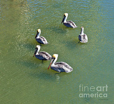 Michelle Wiarda - Five Pelicans
