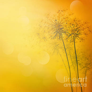 Mythja  Photography - floral abstract background