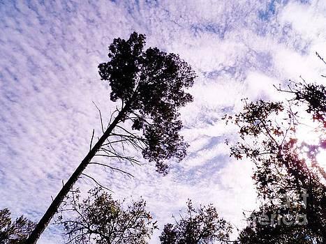 Judy Via-Wolff - Florida Skies