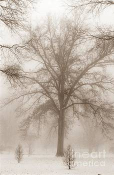 Christine Stack - Foggy Morning